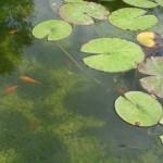 visite aquarium 18 juin 2011-05