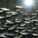 visite aquarium 18 juin 2011-08