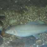 visite aquarium 18 juin 2011-10