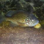 visite aquarium 18 juin 2011-11