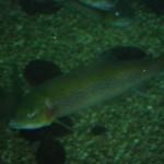 visite aquarium 18 juin 2011-14