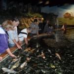 visite aquarium 18 juin 2011-17