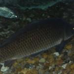 visite aquarium 18 juin 2011-20