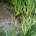 visite aquarium 18 juin 2011-21