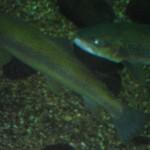 visite aquarium 18 juin 2011-22