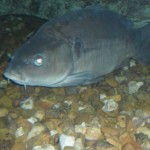visite aquarium 18 juin 2011-24