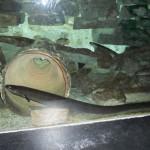 visite aquarium 18 juin 2011-26