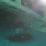 visite aquarium 18 juin 2011-27