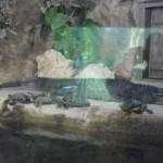 visite aquarium 18 juin 2011-30