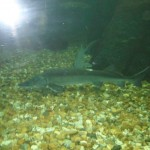 visite aquarium 18 juin 2011-34