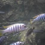 visite aquarium 18 juin 2011-35