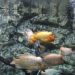 visite aquarium 18 juin 2011-36