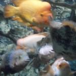 visite aquarium 18 juin 2011-37