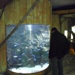 visite aquarium 18 juin 2011-38