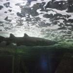 visite aquarium 18 juin 2011-39