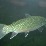 visite aquarium 18 juin 2011-41
