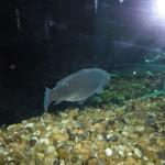 visite aquarium 18 juin 2011-43