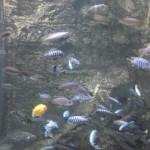 visite aquarium 18 juin 2011-44